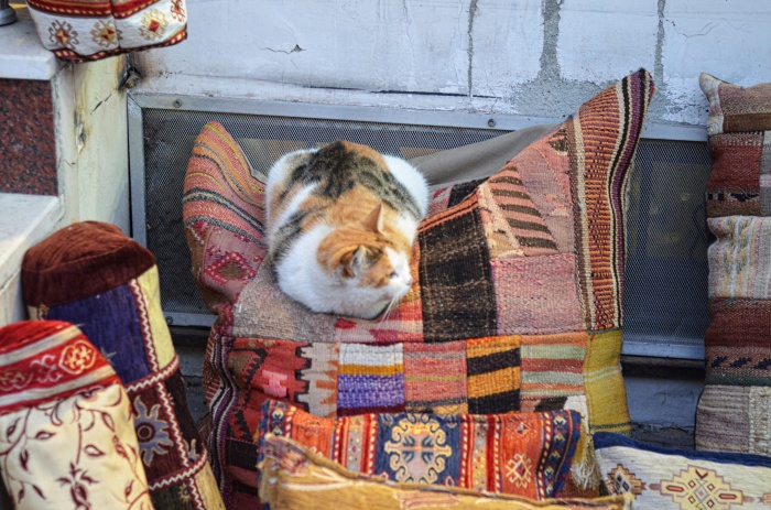 Cats of Istanbul 8