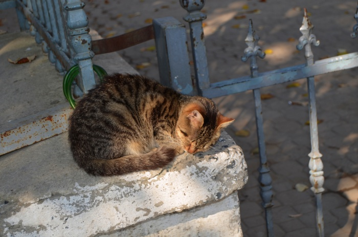 Cats of Istanbul 5
