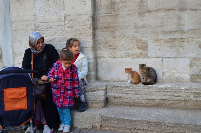Cats of Istanbul 7