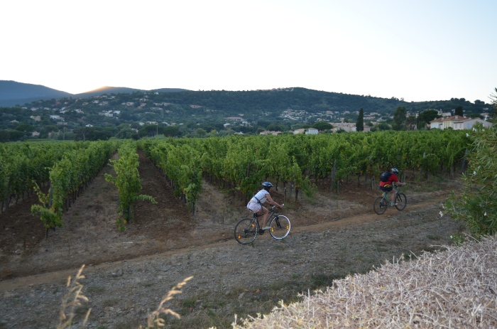 Bicycling along the vineyards in La Croix-Valmer, France
