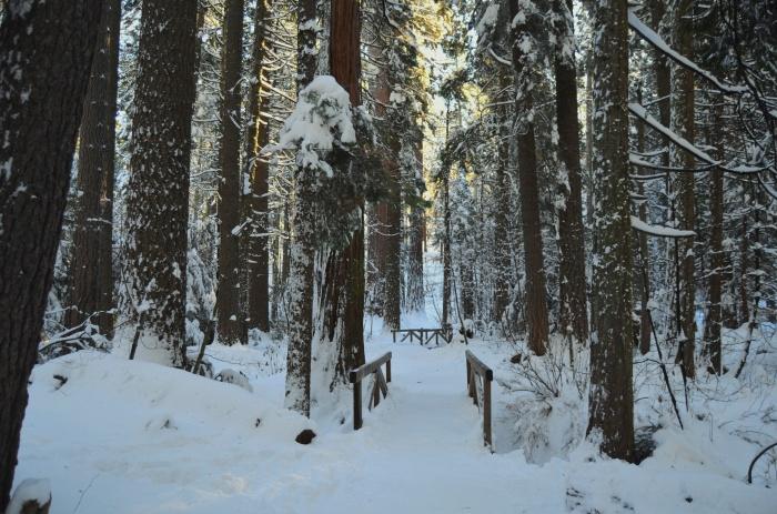 Calaveras Big Trees, California